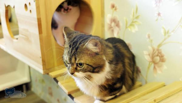caturday養貓人家 (已歇業)