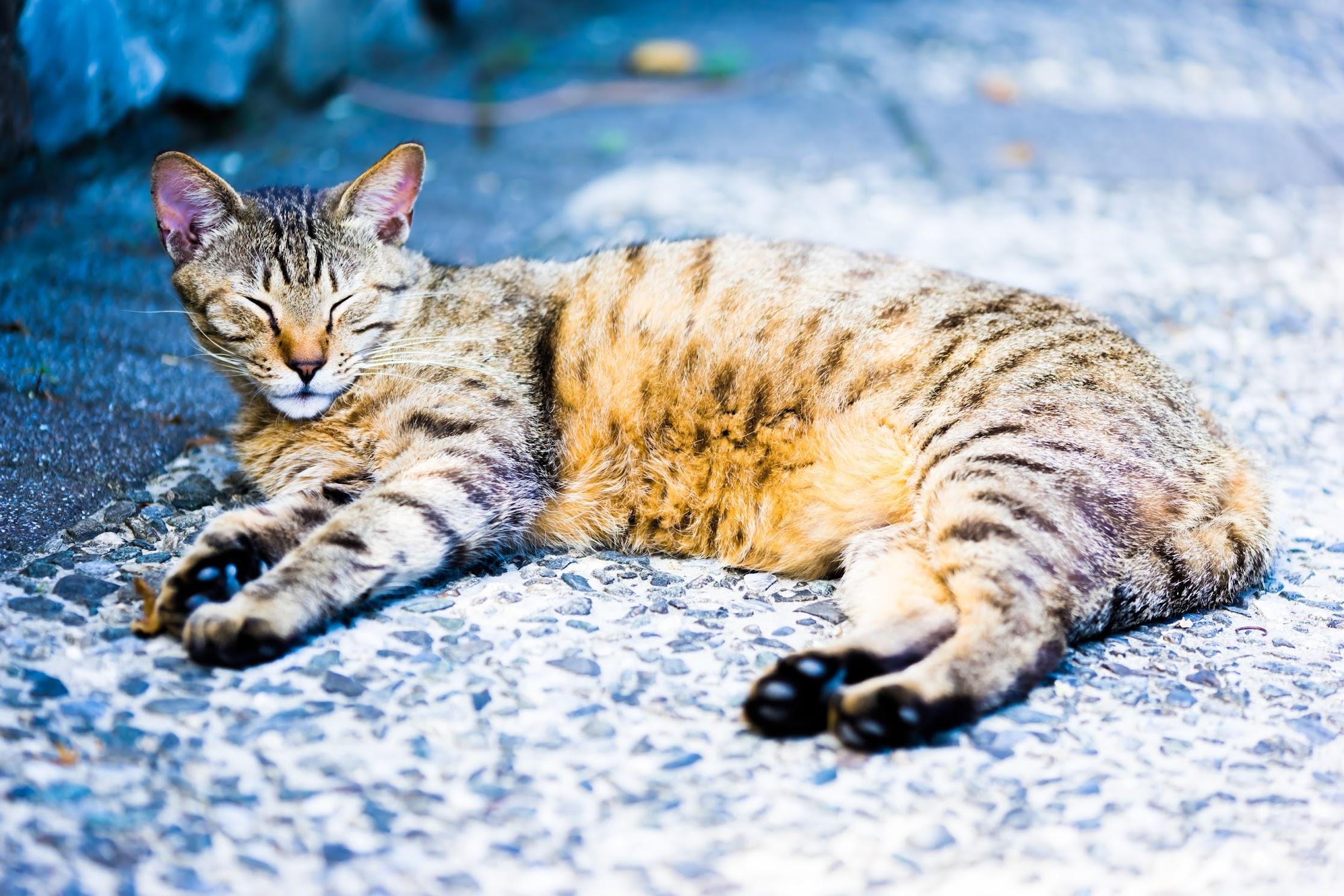 台湾 猴硐 猫4