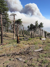 Photo: View south from Hawkins Ridge toward south Hawkins two hours after the Williams Fire 2012 started