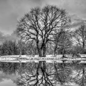 Vice Versa by Mick Brinkmann - Landscapes Prairies, Meadows & Fields