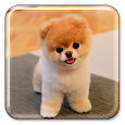 Puppy Live Wallpaper apk
