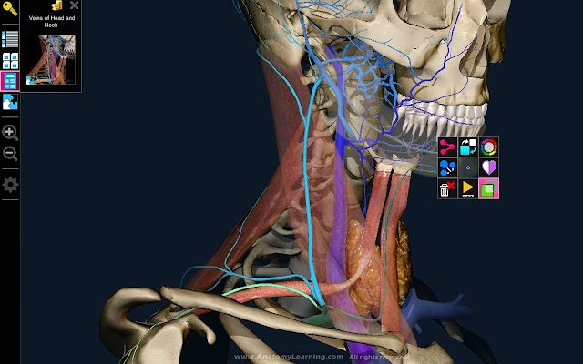3d Anatomy Learning Chrome Web Store