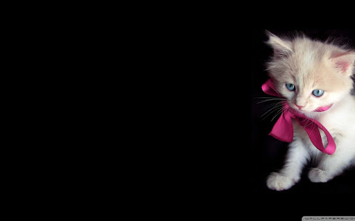 Cat Wallpapers  for PC