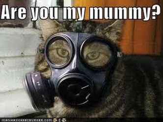 Photo: Meow!!! Are you my mummy?! #caturday   Y #twt