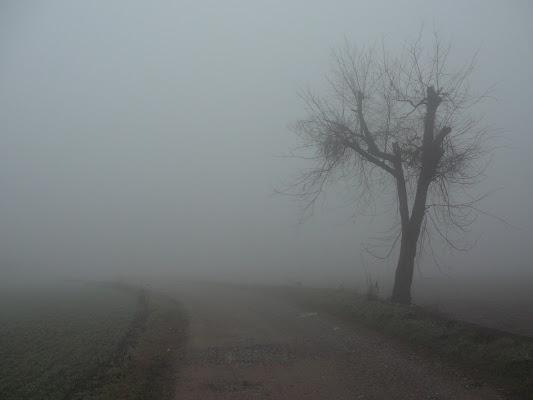 La nebbia di c