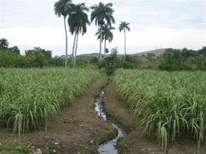 Photo: Sustainable Sugarcane Initiative (Sistema de Caña de Azúcar Sostenible - SiCAS) Jan. 26, 2012 [Photo by Rena Perez]
