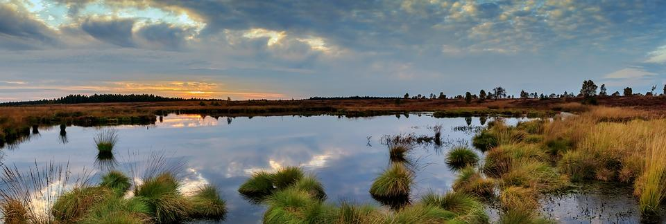 Panorama, Moor, Swamp, Nature Conservation