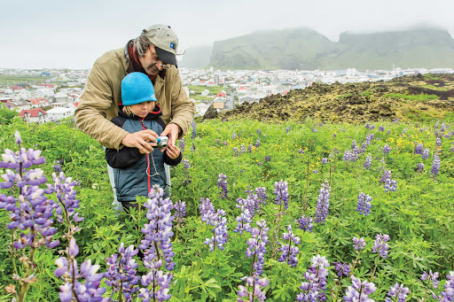 Lindblad-Expeditions-Iceland-Heimay-Father-Son.jpg - A father and son take photos in the beautiful flowered fields of Heimaey, Vestmannaeyjar, Iceland.