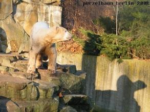 Photo: Knut und sein Schatten ;-)