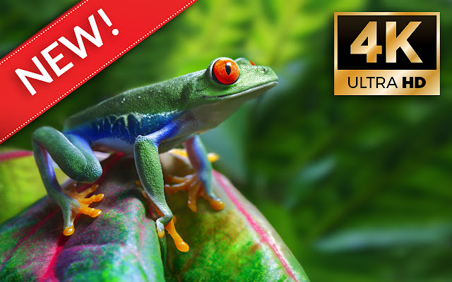 Frogs HD Wallpapers - Custom New Tab