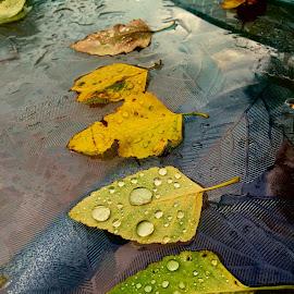 by Mickie MacNicol - Nature Up Close Natural Waterdrops