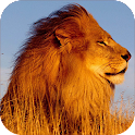 Lion Sounds and Ringtone icon