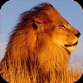 Lion Sounds and Ringtone