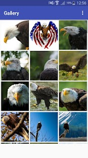 New HD Bald Eagle Wallpapers - náhled