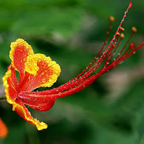Just Flower by Awaludin Aw - Nature Up Close Flowers - 2011-2013