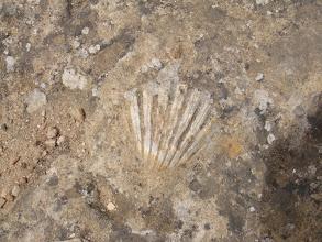 Photo: Coquillage fossilisé dans les dalles près du temple de la Concorde