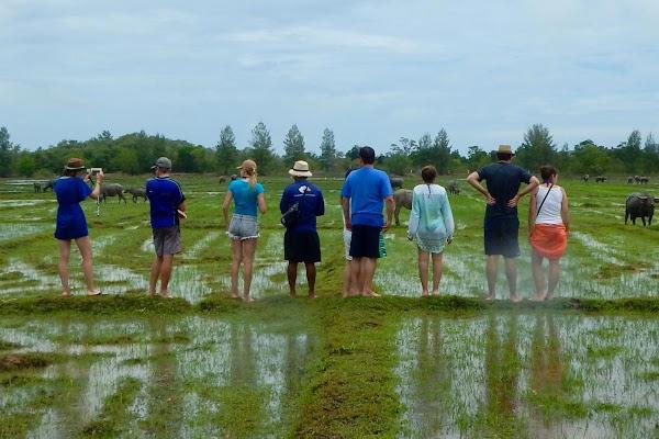 Spot water buffalos on Yao Island
