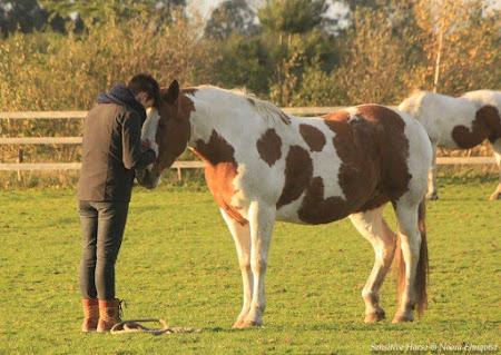 VTM-reportage: Therapie met paarden tegen depressie