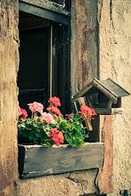 Photo: Flowers in the Window  ...is the optional theme this week for the +#Window Wednesday, curated by +Jules Falk Hunter+Cheryl Cooper+J.J. Bentley+Simon Davis-Oakleyand +Jason Kowing  #windowwednesday  #breakfastclub  #hqspflowers  #hqspnonnaturephotos