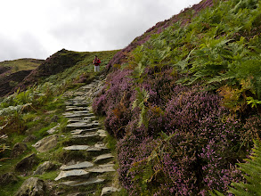 Photo: The trail winds its way down the side of the hill through ferns and purple flowers