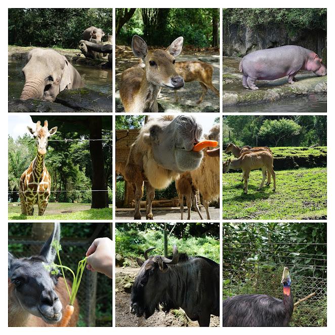 Hewan-hewan berkeliaran bebas di Taman safari Indonesia