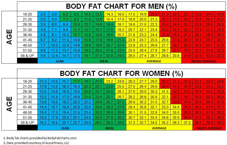 Body Fat Chart  PetitComingoutpolyCo