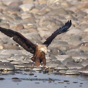 by Arun Baweja - Animals Birds