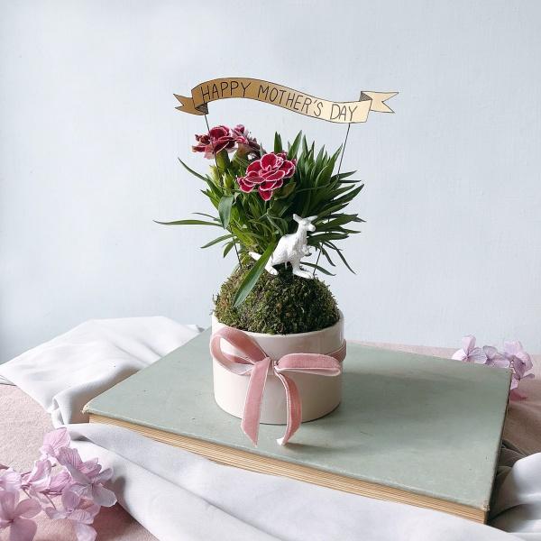 康乃馨苔球盆栽