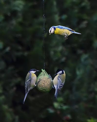 family visit by Ghislain Vancampenhoudt - Animals Birds