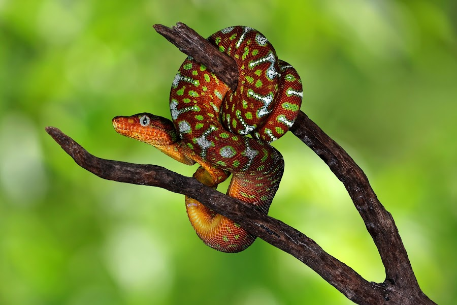 by Terry DeMay - Animals Reptiles (  )