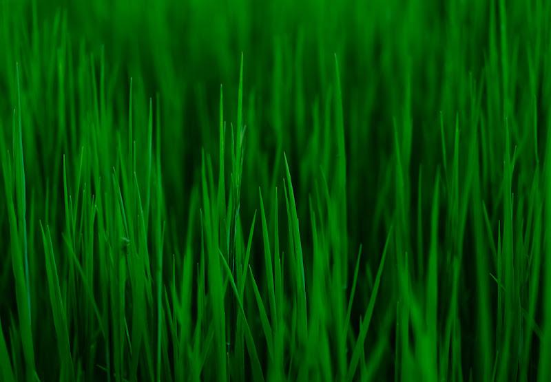 Verdi aculei di PaulRain