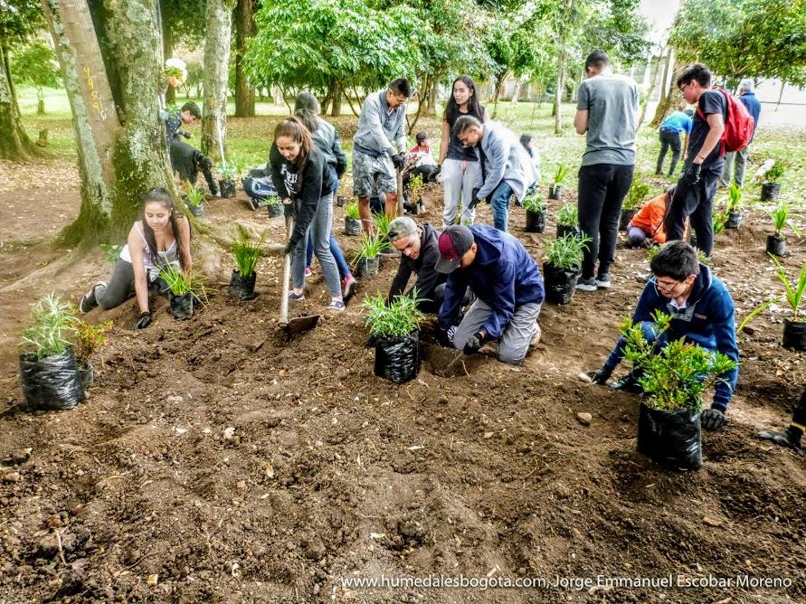 Plantando un jardín biodiverso en Bogotá