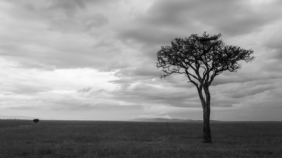 The Lone Tree by Ravi Patel - Landscapes Prairies, Meadows & Fields ( pwcbwlandscapes )
