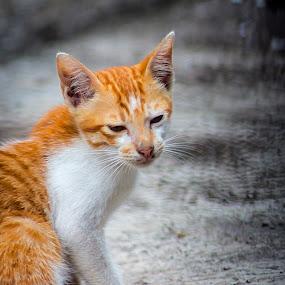 I'm still sleepy by Hsn Doel - Animals - Cats Playing