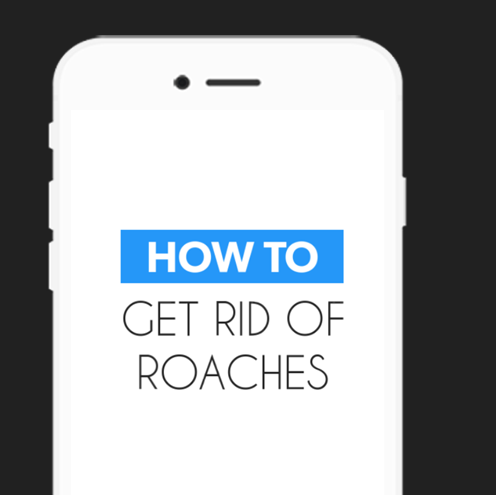 How To Get Rid Of Roaches Android Apps On Google Play