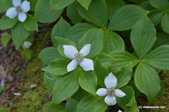 Photo: Pretty little white flowers at Woodford State Park by Bill Steele