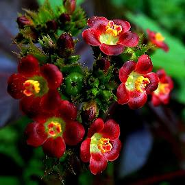 Gorgeous by Umesh Halder - Flowers Flowers in the Wild ( nature, flower, wild flowers )
