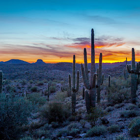 Sunset in the Desert by Dale Fillmore - Landscapes Sunsets & Sunrises ( mountains, sunset, cacti, clouds, desert, twilight,  )