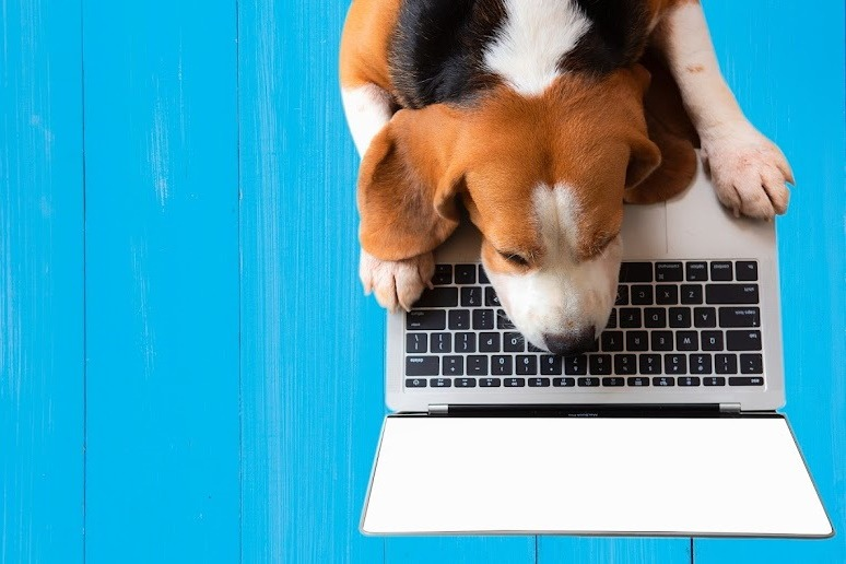 What to Look for in Pet Sitting Software