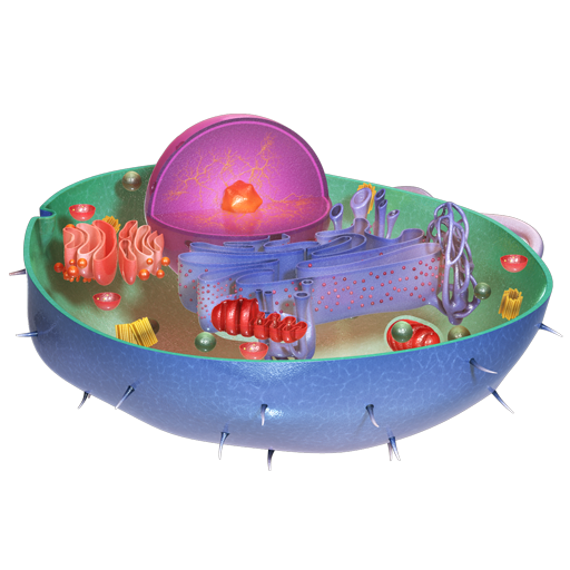 VR Animal Cell
