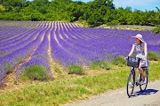 Велотур по Провансу