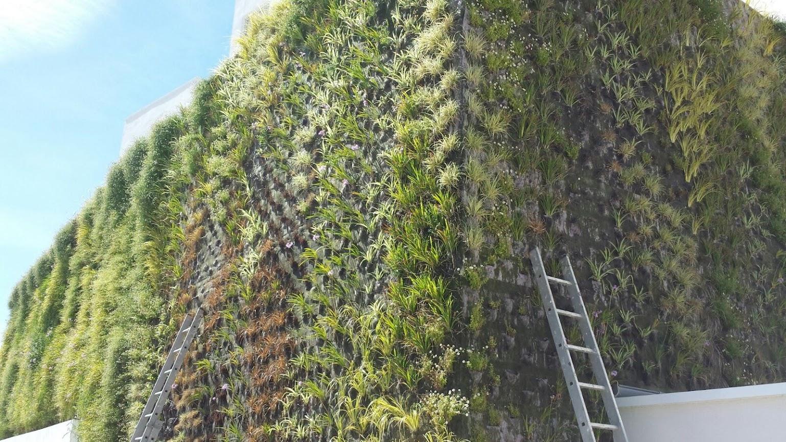 Jardín vertical en Palma de Mallorca