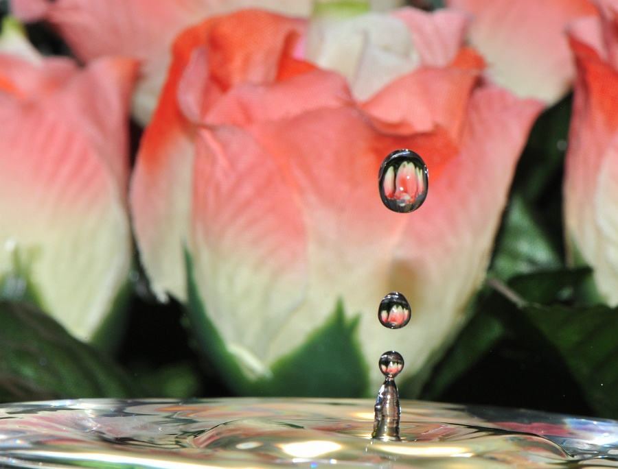 waterdrops by Paul Wante - Nature Up Close Natural Waterdrops ( abstract, water, roses, drops, flower )