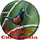 Cantos De Curio Praia for PC-Windows 7,8,10 and Mac