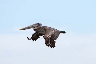 Photo: wingtip up, like a pinky