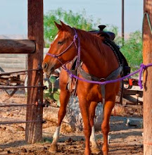 Photo: SADDLED & READY TO RIDE