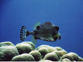 Photo: #006-Poisson coffre