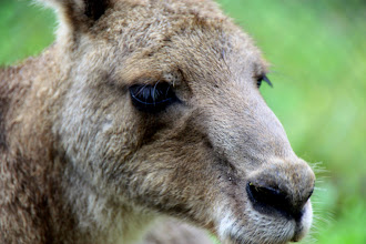 Photo: Year 2 Day 153 -  Lovely Roo
