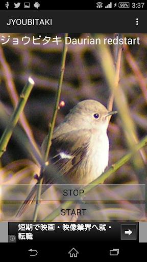 玩免費娛樂APP|下載鳥鳴き声ジョウビタキ app不用錢|硬是要APP