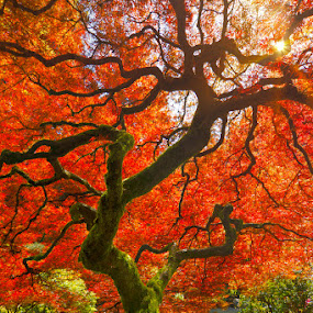 Wishing Tree by Craig Bill - Nature Up Close Trees & Bushes (  )